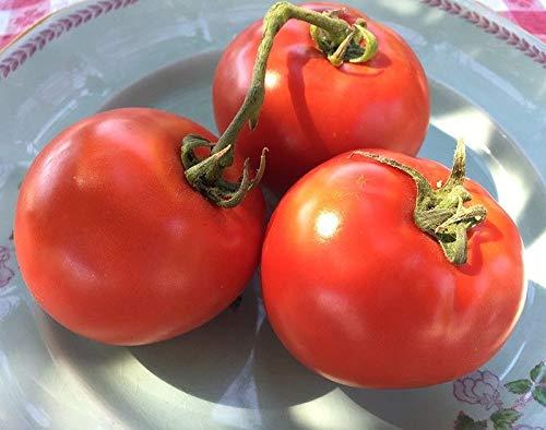 40 graines Brandywine noir-Bio Heirloom Tomato seeds-Super Coupe