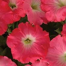 25 Pelleted Seeds Easy Wave Rosy Dawn Petunia Seeds Trailing Petunia AIND-501