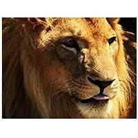 数字油絵 数字キット塗り絵 手塗り DIY絵 ライオン動物 デジタル油絵 40 x 50 cm ホーム オフィス装飾