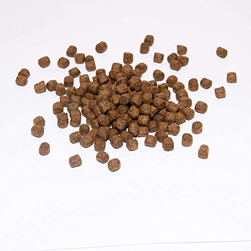 Koi Koifutter * Top Energy Plus * 5KG von Warnick´s Tierfutterservice (6mm)