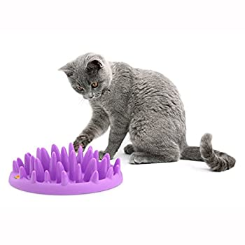 Company of Animals The Catch Gamelle Interactif pour Chat