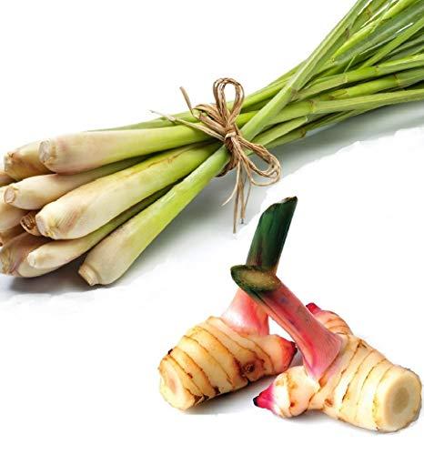 Pamai Pai® SET: 100g Frischer Galgant + 100g Frisches Zitronengras Thai Gemüse zum Kochen