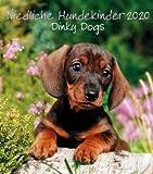 Niedliche Hundekinder - Dinky Dogs - Kalender 2020 - teNeues-Verlag - Wandkalender mit niedlichen Hundebabys und Platz für Eintragungen - 30 cm x 34 cm