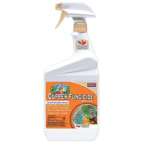 fungicide for succulents
