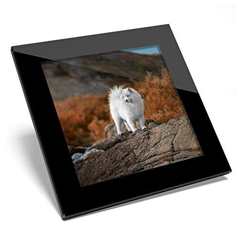 Posavasos de cristal impresionante – Samoyed Husky Cachorro Naturaleza Brillante Calidad Posavasos Protección de mesa para cualquier tipo de mesa #46271
