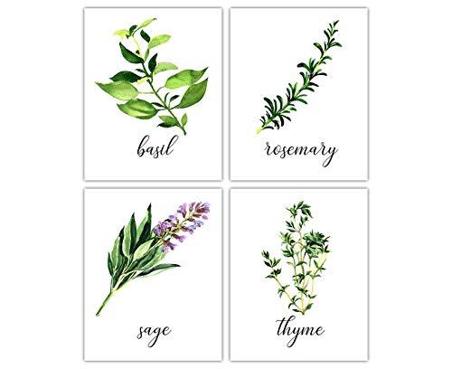 Kitchen Herbs Unframed Art Prints: Basil Sage Rosemary Thyme - Set of Four Photos (8x10) - Great Kitchen Decor Gift Idea