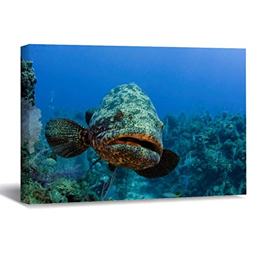 Atlantic Goliath Grouper Canvas Picture Painting Artwork Wall Art Poto Framed Canvas Prints for Bedroom Living Room Home Decoration, Ready to Hanging 8'x12'