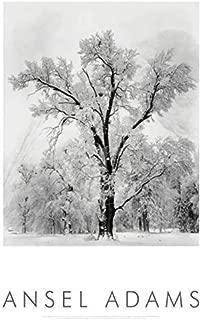 Oak Tree Snowstorm by Ansel Adams 24x36 Black & White Landscape Print Poster