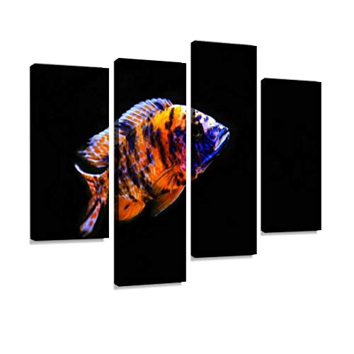 HIPOLOTUS 4 Panel Canvas Pictures aulonocara ob African Cichlid Fish European Peacock Stock Pictures, Wall Art Prints Paintings Stretched & Framed Poster Home Living Room Decoration Ready to Hang