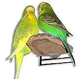3er Pack Kork-Sitzbrettchen für den Vogelkäfig. Tolles Vogelspielzeug zum Knabbern. Sitzbretter sollten in keiner Voliere fehlen
