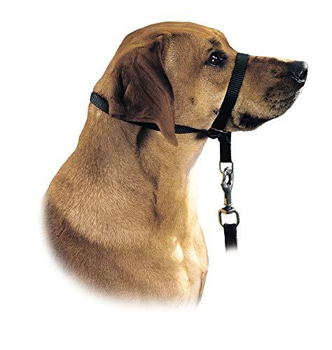 HUNTER Ausbildungs-Hundegeschirr Follow Me, XL, schwarz, Nylon