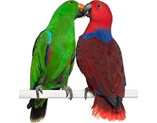 Wandtattoo No.645 Verliebte Papageien WandSticker WandTattoo Vögel Vogel
