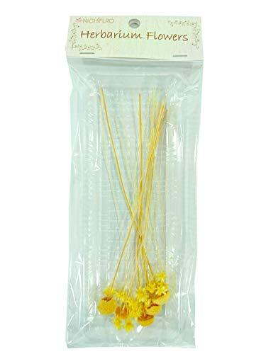 ニチフロ(Nichiflro) ハーバリウム用花材 ミニフラワーMIX イエロー