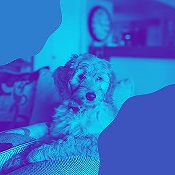 器楽-孤独な犬
