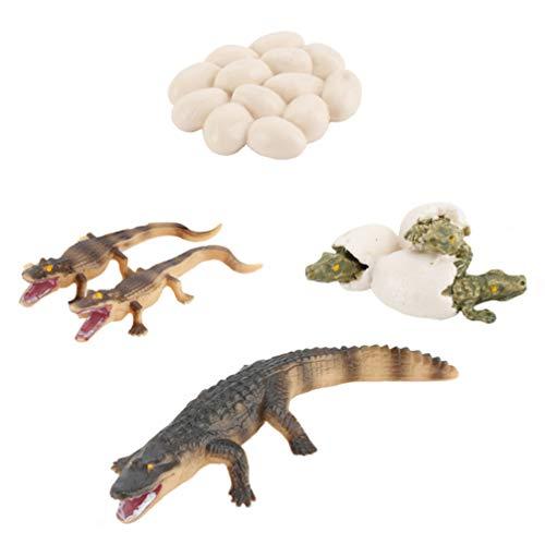 Kisangel 1 Juego de Figura de Ciclo de Vida de Cocodrilo Estatua de Plástico Realista Huevo de Cocodrilo Juguete Modelo de Cocodrilo Juguete Educativo Animal Año Nuevo Regalos de