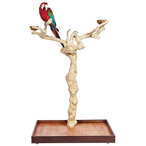 Java Duo Tree | Soporte de Madera Natural para Loros, café, cacatúa, Guacamayo, Grande