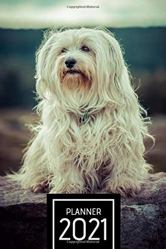 Planner 2021: Weekly, daily, planner 2021 with Havanese Dog. Simple organizer. Schedule. Gift for dogs lovers, animals lovers. Plenty of space for ... Appointment. Calendar 2021 Havanese Dog.