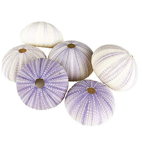 CYS EXCEL Purple Sea Urchin Seashells (Approx. 2'-3')(6 PCS) | Multiple Color Choices Jellyfish Air Plant Nautical Décor | Coastal Beach Crafts Sea Decoration Ornaments