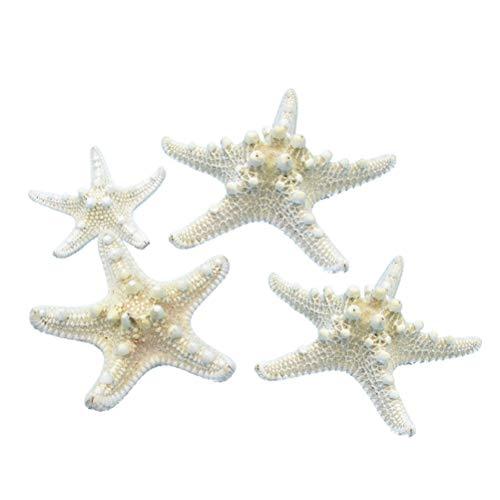 Amosfun Seesterne Natürliche Echte Deko Seestern Maritime Micro Landschaft Aquarium Ornament Hochzeit Deko 5-8cm 4 Stück