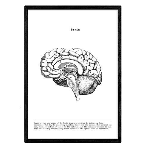 Nacnic Anatomi affischen. Vintage stil väggdekoration bild av halverad hjärna, muskler och ben. Olika människokroppar, biologi och medicinbilder utan ram. Storlek A4.