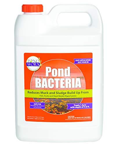 PondWorx Pond Bacteria