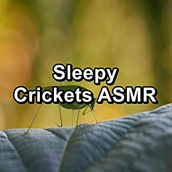 Sleepy Crickets ASMR