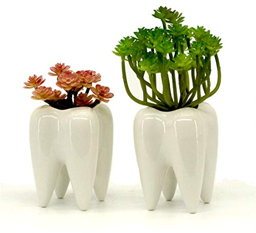 Tooth Shaped Planters