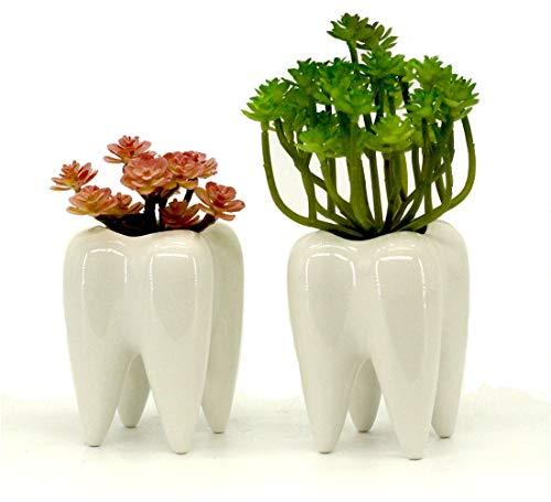 MONMOB Tooth Planter Pot