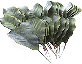 BD Crafts Artificial Magnolia Leaves Pack of 30 Leaves