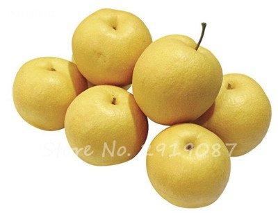 5 Pcs chinois poire Graines de sable blanc poire juteuse charnues fruits doux et délicieux vert sain nourriture savoureuse Bonne jardin des plantes