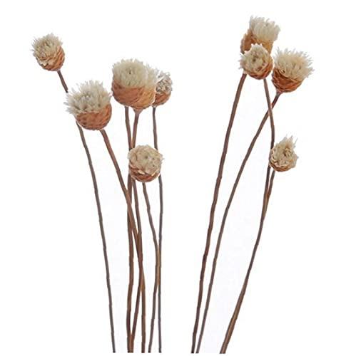 20pcs Reemplazo Recambio Rattan Pega Difusor Sticks Rota del Brote De Flor Rosa Esencial Difusor De Aceites para Dormitorio
