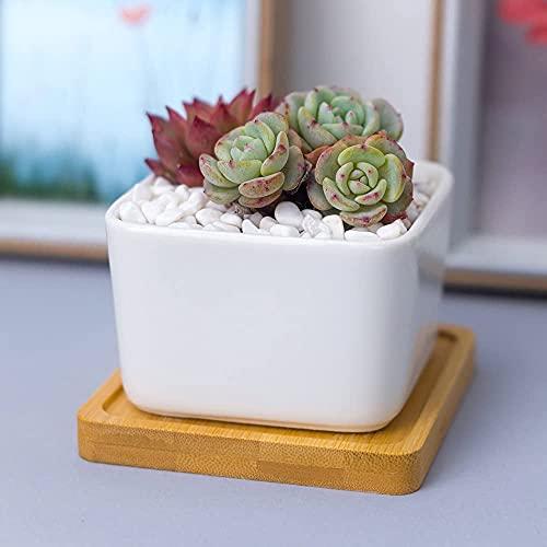 TREEECFCST Macetas De Ceramica Macetero Maceta de jardín de cerámica Cuadrada con Bandeja de bambú Maceta Decorativa Moderna para Adornos de jardín Interior Uso para Plantas de Interior de Cactus