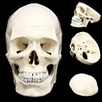 人間の頭の頭蓋骨モデル1:1解剖学的モデル医学頭蓋骨の人間の解剖学的解剖学の頭は学校のための解剖学の教育用品を研究しています