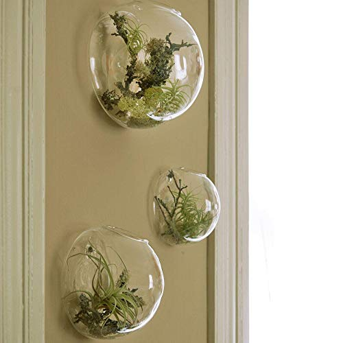 Wall-mounted glass terrarium displays