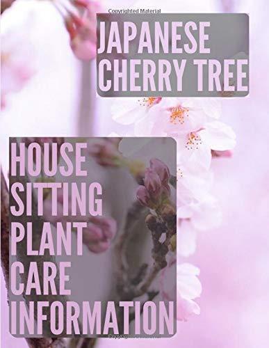 Japanese Cherry Tree: Sitting plant care information - Journal japanese cherry blossom tree