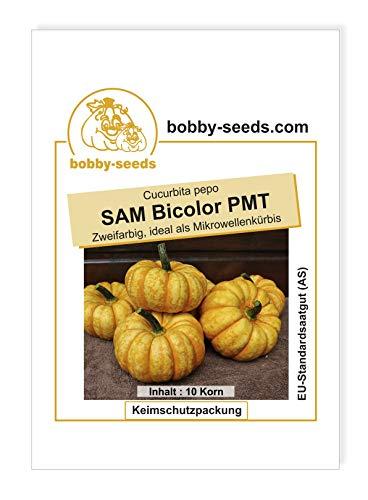 SAM Bicolor PMT Kürbissamen von Bobby-Seeds Portion