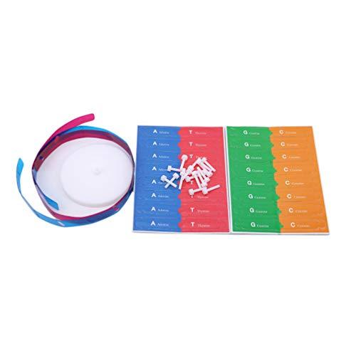 Mvude DNA-Modell für menschliche Gene Double Helix DNA Modelle Kit Biologische Lehrhilfen Lernspielzeug