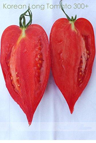 (* KLT300 Ambizu *) coréenne longue graines de tomate, Paquet professionnel, 300 graines