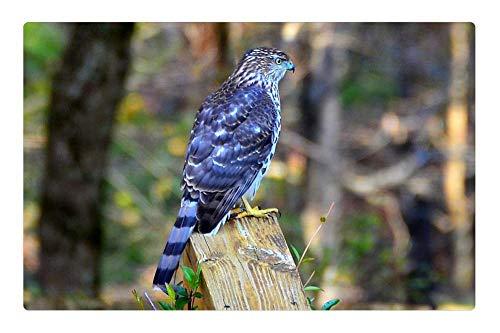 LESGAULEST Doormat Floor Rug/Mat (23.6 x 15.7 inch) - Hawk Blue Georgia Bird Fly Wings Feather