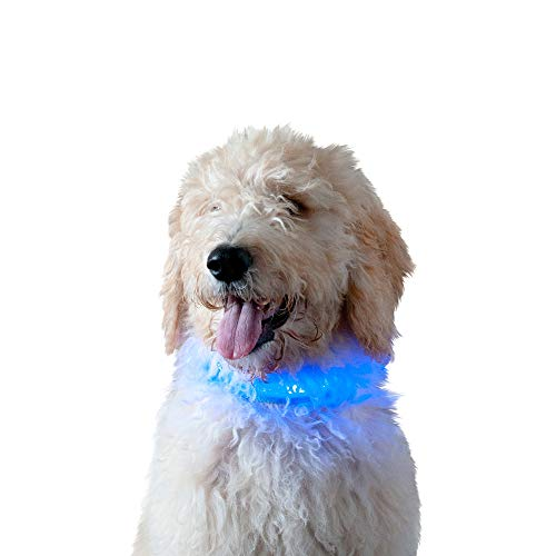 Furhaven Pet Dog Collar - 1,000-ft High Visibility Bright LED Light-Up Dog Walking Safety Pet Collar for Dogs and Cats, Blue, Small