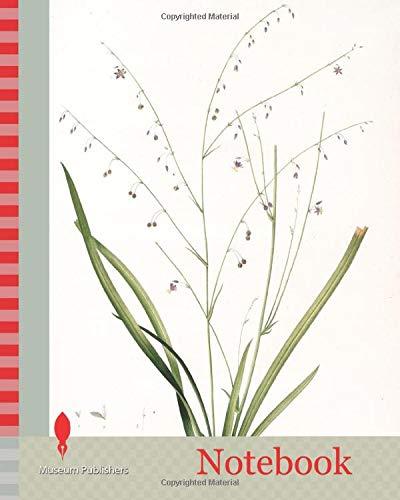 Notebook: Phalangium pendulum, Arthropodium paniculatum, Phalangére à fleurs pendantes, Redouté, Pierre Joseph, 1759-1840, les liliacees, 1802 - 1816