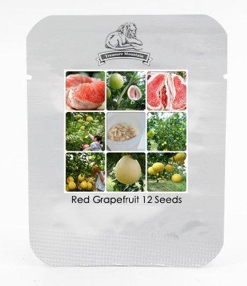 Fu'jian Big Red douce Pamplemousse Hybrides Graines, Paquet professionnel, 12 graines / Pack, Tasty Très doux Juicy Fruit TS118
