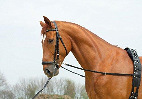 BUSSE Ausbindezügel BASIC-STARR, G-Pony/VB, schwarz/NP