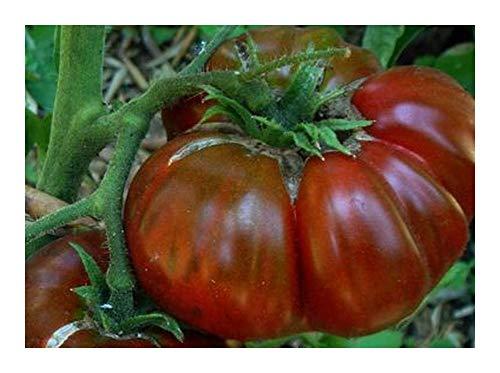 Tomate Black Aisberg - tomate beefsteak de couleur sombre - 20 graines