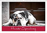 Hunde-Spruchreif (Wandkalender 2020 DIN A4 quer): Ein Kalender für Hundefreunde (Monatskalender, 14 Seiten ) (CALVENDO Tiere)