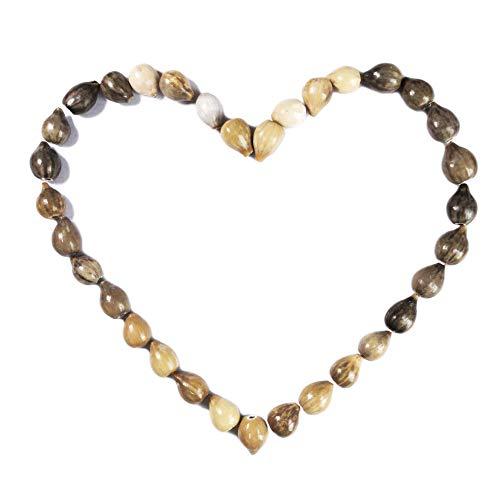 BrightTea Job's Teardrop Beads Natural or African Zulu Grey Seeds pkg of 50p