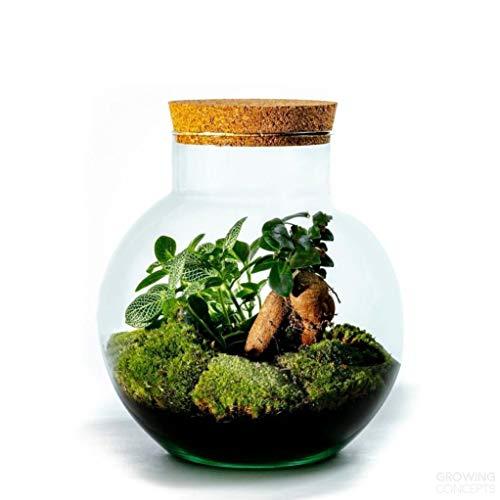 DIY Öko Flaschengarten von Botanicly:...