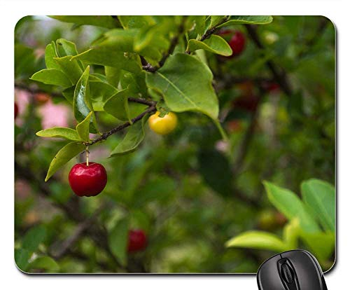 Mouse Pad - Nature Leaf Fruit Tree Branch Shrub Summer