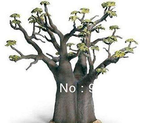 Les semences importées, 2 graines graines graines de baobab africain bonsaïs grande qualité bricolage maison jardin