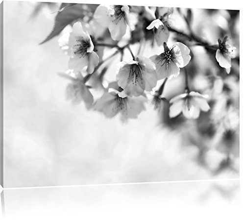Pixxprint Kirschblüten an Baum als Leinwandbild | Größe: 100x70 | Wandbild| Kunstdruck | fertig bespannt
